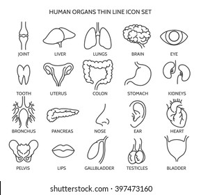 Human organ signs or body parts symbols. Tooth and brain line icons, eye and liver images. Vector illustration