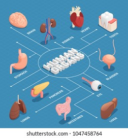 Human organs anatomy isometric flowchart with pancreas stomach liver heart eye tooth lungs brain kidneys vector illustration