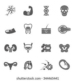 Human Organs Icons Set.