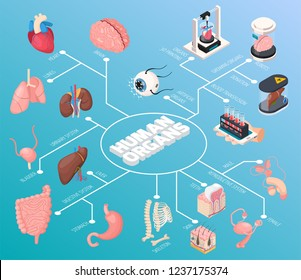 Human organs isometric flowchart  demonstrated male and female internal organs and also blood transfusion donation and 3d printing vector illustration