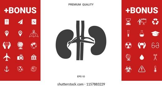 Human organs. Kidney icon