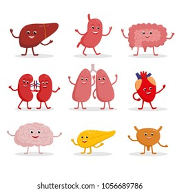 Human organs vector cartoon characters illustration in flat design. Cute smiling healthy organs icon set isolated on white. Heart, liver, brain, stomach, lungs, kidneys, intestine, pancreas, bladder.