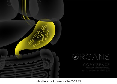 Human Organs X-ray set, Stomach infection concept idea yellow color illustration isolated glow in the dark background, with Organ text icon and copy space
