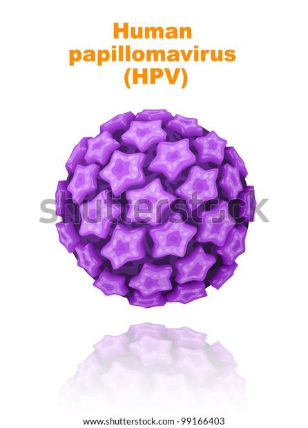 papilloma virus prostatite curator