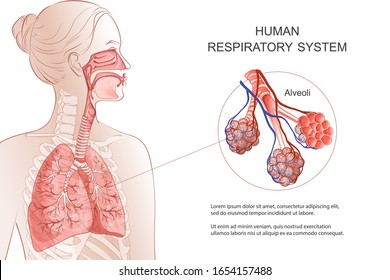 Human Respiratory System, lungs, alveoli. Medical diagram. Inside larynx nasal throttle anatomy. Breath, pneumonia, smoke. Vector Anatomy illustration. Healthcare and medicine infographic.