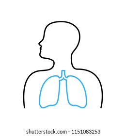 Human Respiratory System Lungs Anatomy. Lungs vector icon.