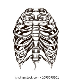 Human ribs sketch for tattoo, for printing on T-shirts and other items, for stickers. Template for coloring, engraving, pyrography.