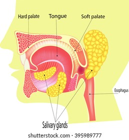 Human Saliva,  Human Saliva,   All elements are in separate layers color can be changed easily.