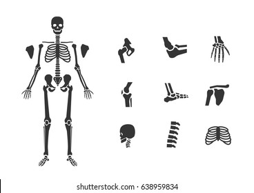 human skeletal full body and joints icon set flat design