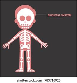 Human Skeletal System Grey