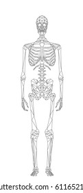 Human skeleton, abstract polygonal style illustration isolated on white, vector file