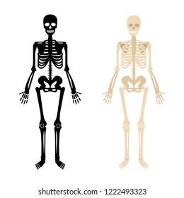 human skeleton back white bones 260nw 1222493323 royalty free human skeleton images, stock photos & vectors