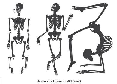 Human skeleton. Black on white. Set do it yourself with moving arms, legs, skull and wrist. Vector