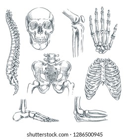 Human skeleton, bones and joints. Vector sketch isolated illustration. Hand drawn doodle anatomy symbols set.
