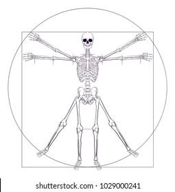 A human skeleton in a Da Vinci Vitruvian man style pose