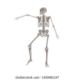 Human skeleton dancing, medical body anatomy model with arm bone raised in dynamic motion, realistic cartoon flat vector illustration isolated on white background