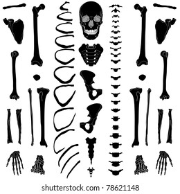 Human skeleton, eps 10