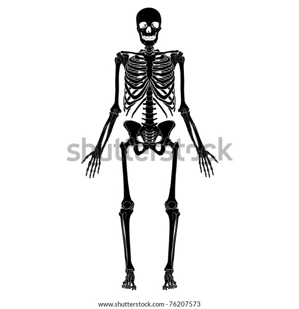 Human skeleton, eps 10