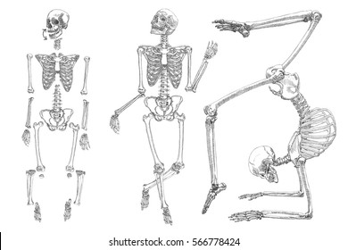 Human skeleton. Hand drawing. Set do it yourself with moving arms, legs, skull and wrist. Vector