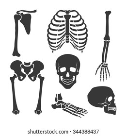 Human skeleton.  Orthopedic and spine, skull, hand and backbone illustration Vector set