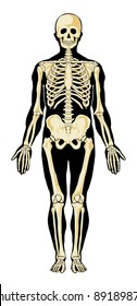 Human skeleton in separate layers. Vector illustration