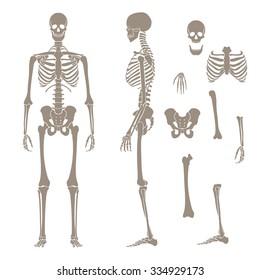 Human skeleton silhouette