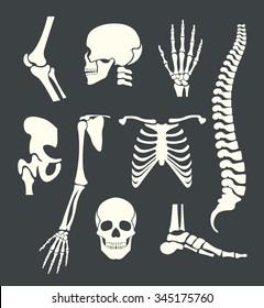 Human skeleton. Vector white illustration set