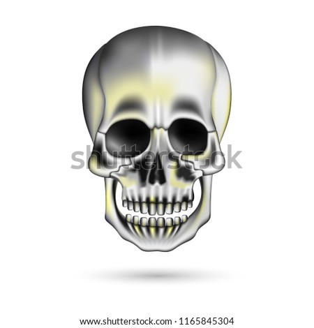 Human Skull 3 D Isolated On White Stock Vector (Royalty Free