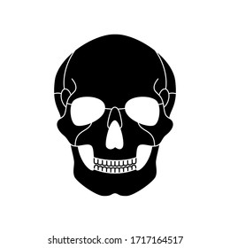 Human skull anatomy. Flat vector medical illustration isolated. Structure of facial skeleton. Cranium diagram. Educational, science poster. Front anterior view