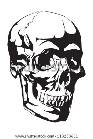 Human Skull Anatomy Sketch Stock Vector Royalty Free 113233651