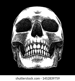 Human Skull, Detailed Illustration, Hand Drawn Sketch, Isolated Vector