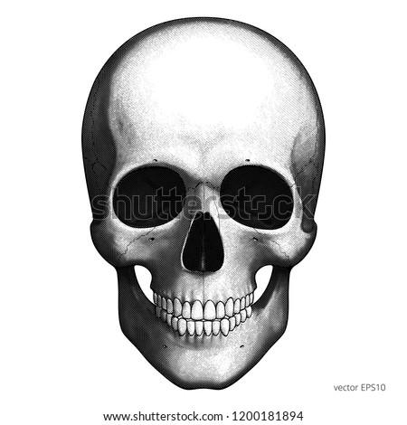 Human Skull Detailed Vector Etching Engraving Stock Vektorgrafik