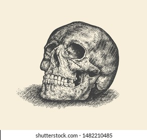 Human Skull.  Hand Drawn Engraving Style. Vector Illustration.