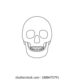 Human skull line icon isolated on white background. Vector illustration