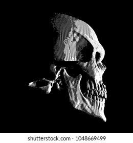 Human skull on dark background