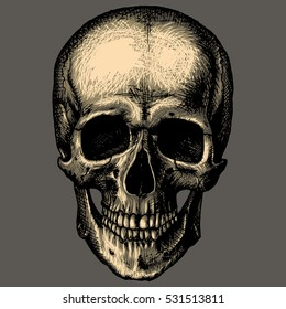 528125c96f613 Similar Images, Stock Photos & Vectors of Yelling Skull - 25090207 ...
