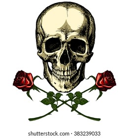 A human skull with two roses on white background
