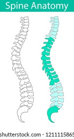 Human spine anatomy isolated vector illustration. Spine pain medical center, clinic, institute, rehabilitation, diagnostic, surgery logo element. Spinal icon symbol design.