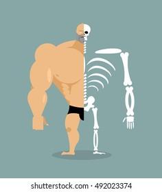 human structure. Skeleton men. construction of athlete. Bones and skull. Guy internal organs. bone system. Anatomy bodybuilder.