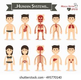 Human systems ( gastrointestinal or digestive , skeletal , cardiovascular or circulatory , respiratory , gynecological , neurological , hepatobiliary , genitourinary ) ( flat design )