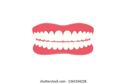 Human Teeth, Dental care model, medical and healthcare illustration about human anatomy