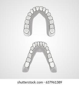Human teeth, human jaw, the location of teeth in humans. Flat design, vector illustration.