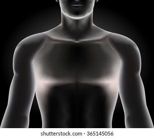 Human torso on black background, vector