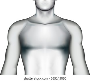 Human torso on white background, vector