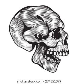 Human Vector Skull Vintage Illustration