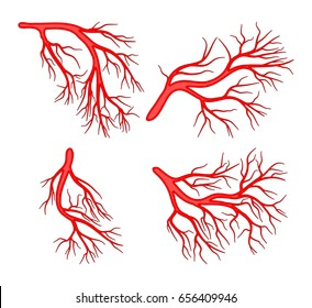 human vein set vector symbol icon design. Beautiful illustration isolated on white background