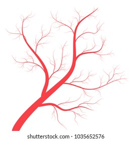 Human veins, red blood vessels design on white backgroun. Vector illustration