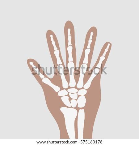 Human Wrist Hands Bones Vector Stock Vector (Royalty Free) 575163178 ...