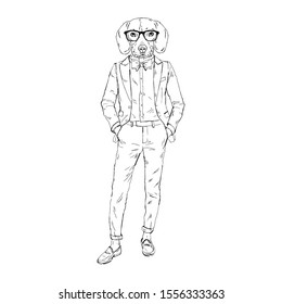 Humanized Beagle breed dog dressed up in retro outfits. Design for dogs lovers. Fashion anthropomorphic doggy illustration. Animal wear suit, tie bow, glasses. Hand drawn vector.
