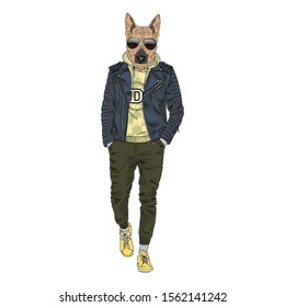 Humanized German Shepherd breed dog dressed up in modern city outfits. Design for dogs lovers. Fashion anthropomorphic doggy illustration. Animal wear leather jacket, jogging pants, hoodie and